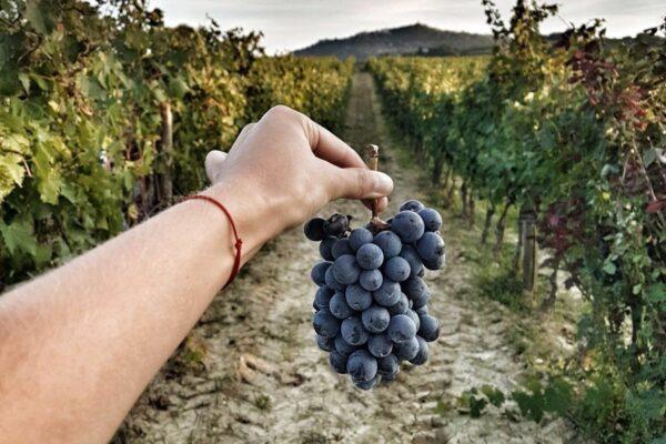 Кьянти – дегустация лучших вин (фото)