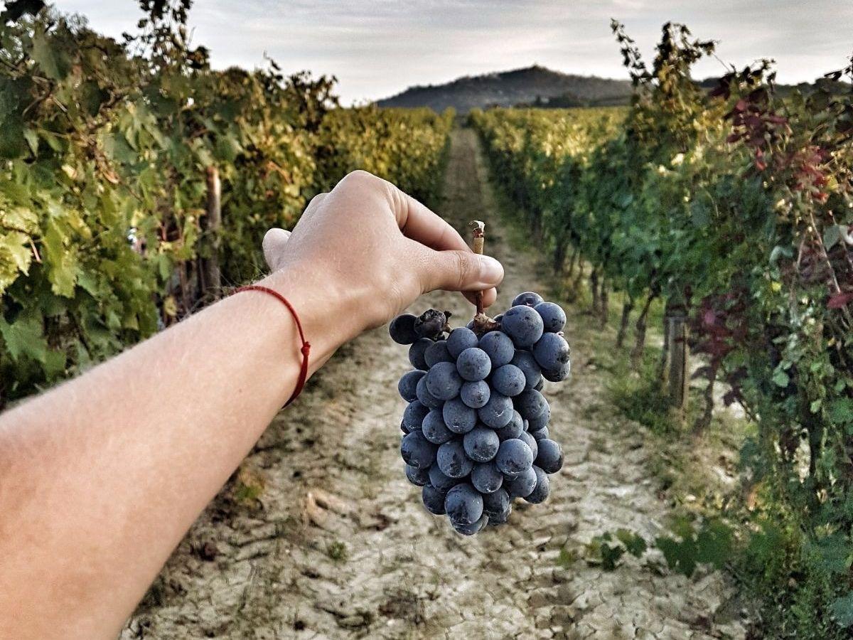 Кьянти – дегустация лучших вин