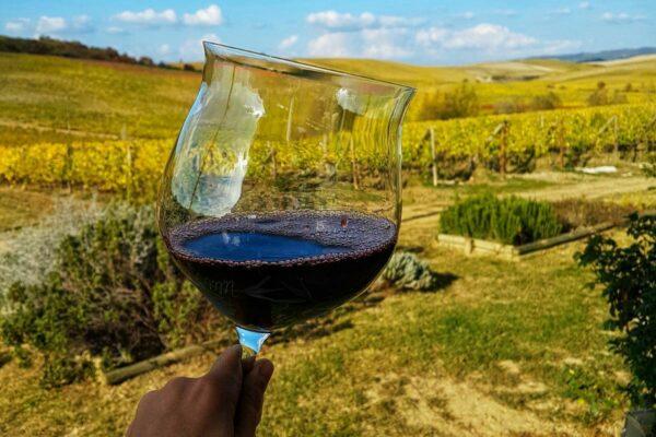 Супертосканские вина - Сассикайя и Орнелайя (фото)